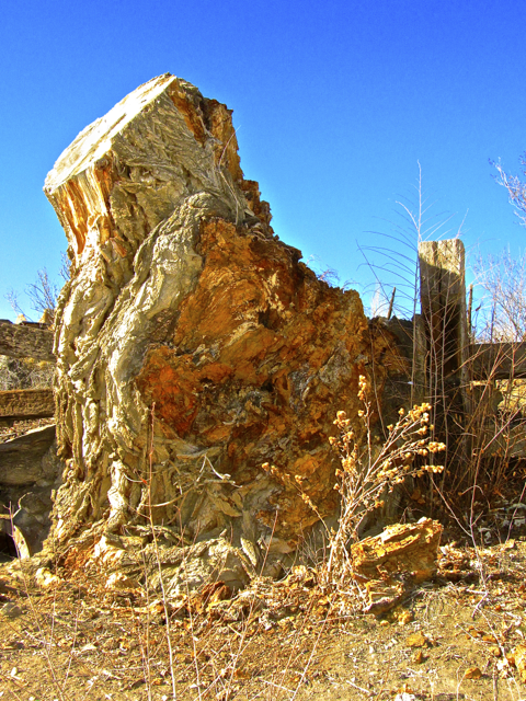 Desert Stump